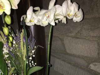 A Fleur de Pot 3
