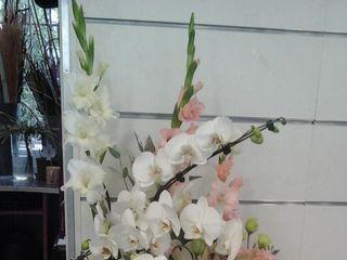 Dany Fleurs 5