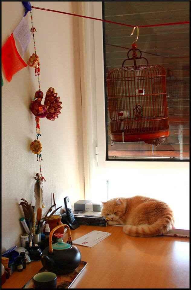 idée cage asiatique