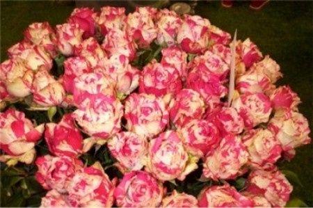 Calendrier des fleurs les annuelles d coration forum - Calendrier des fleurs coupees ...