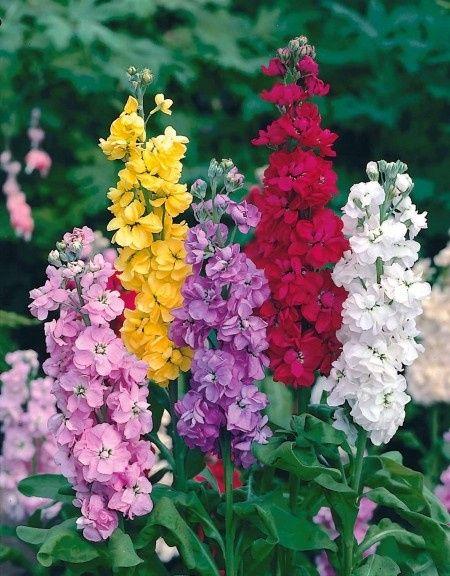 Calendrier des fleurs et d coration forum - Quand couper les fleurs fanees des hortensias ...
