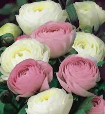 Parlons fleurs - 4