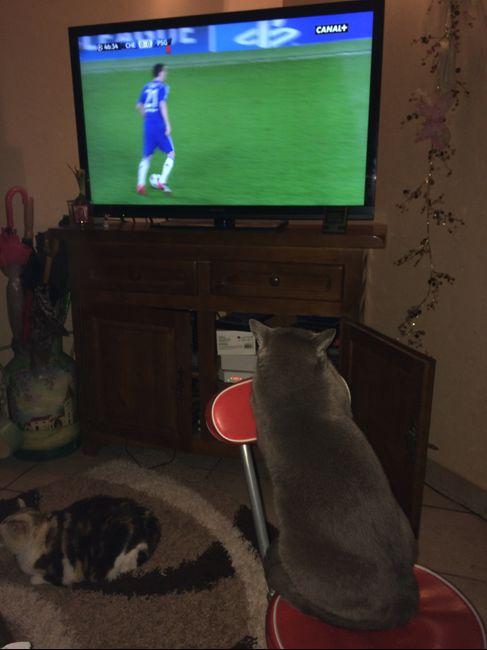 Mon chat qui regarde le foot