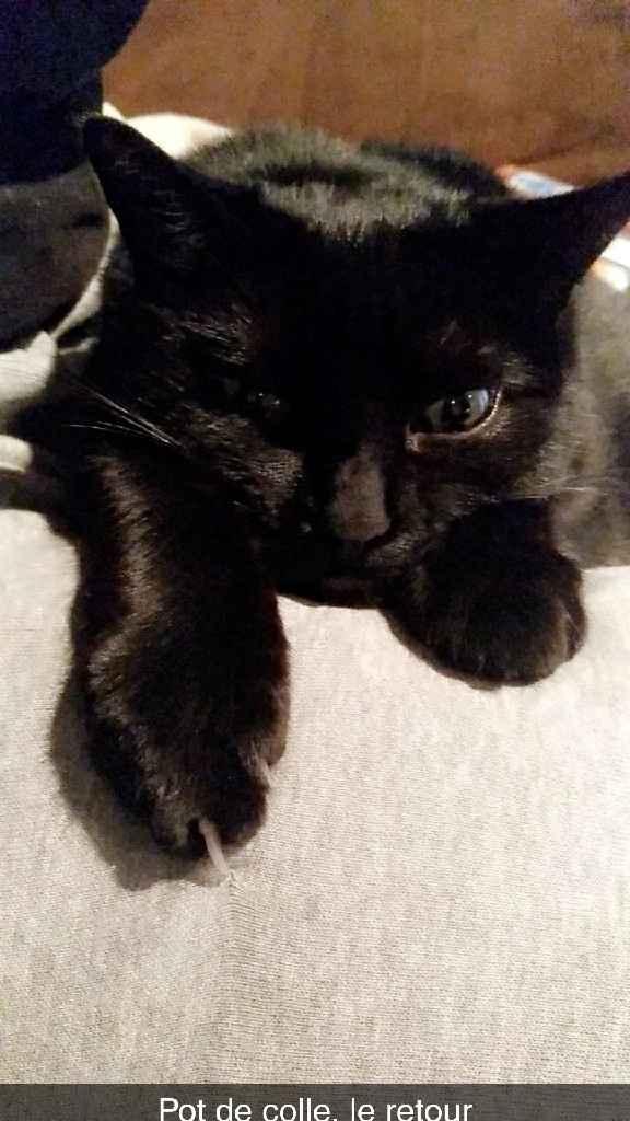 Mon petit bébé chat 😋 - 1