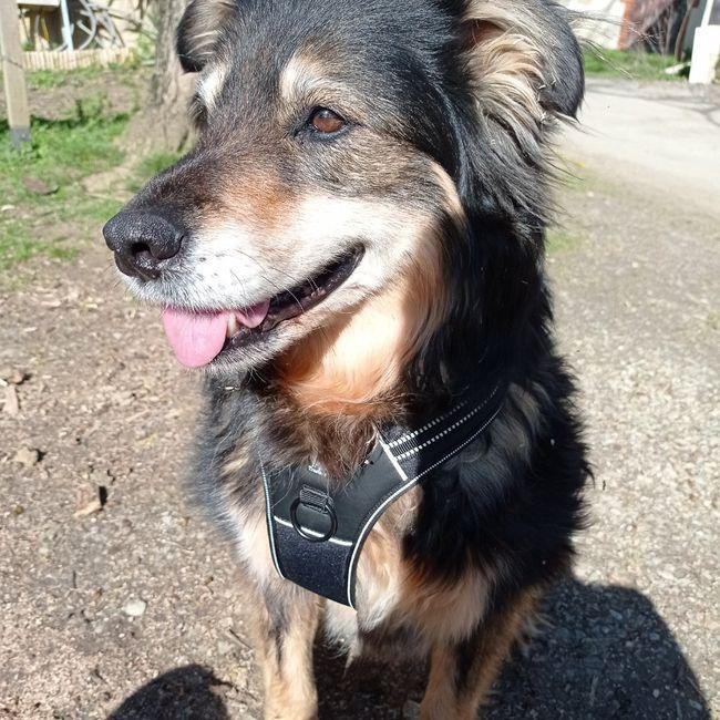 Des photos avec vos chiens ? 🐶 3