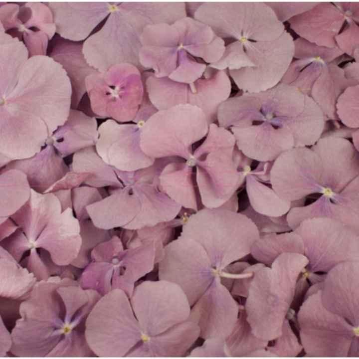 Fleurs stabilisées - 2