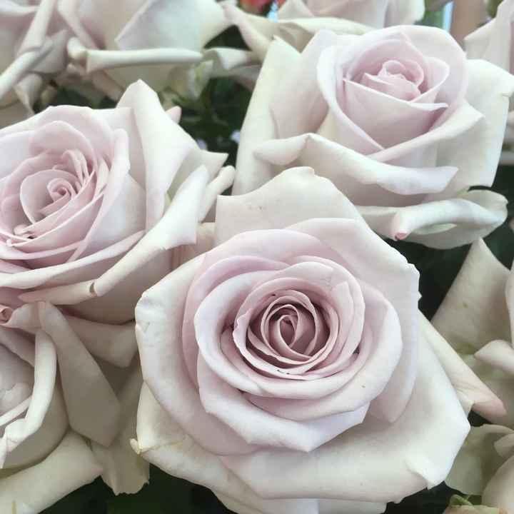 Rose de bouquet - 1