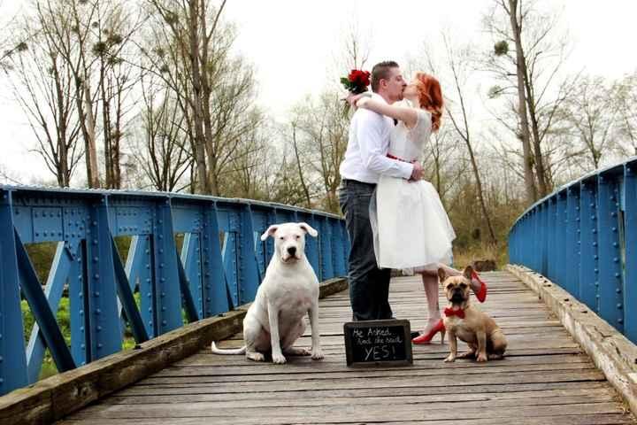 photo d'engagement avec les chiens