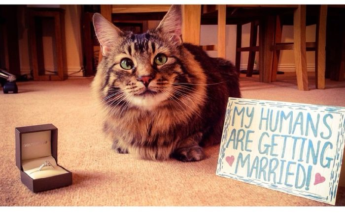 Feriez-vous annoncer votre mariage par votre chat ? 1