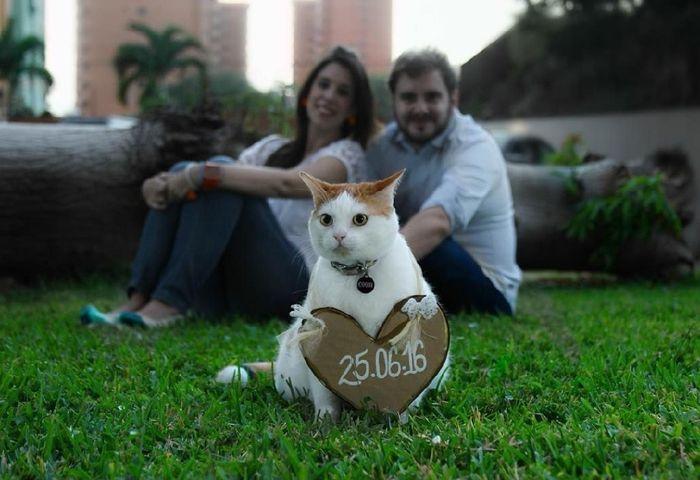 Feriez-vous annoncer votre mariage par votre chat ? 2