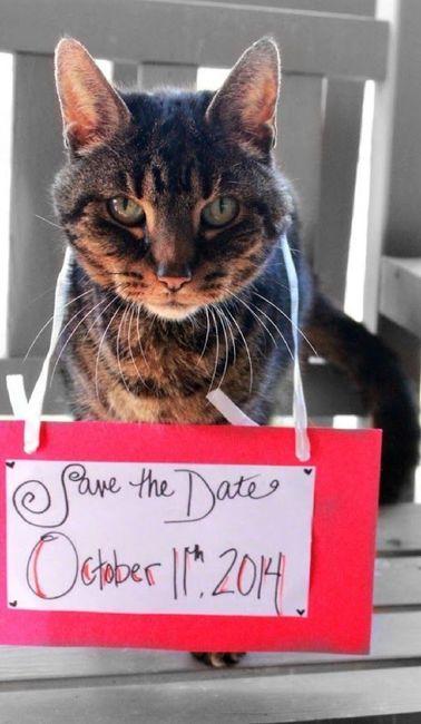 Feriez-vous annoncer votre mariage par votre chat ? 3