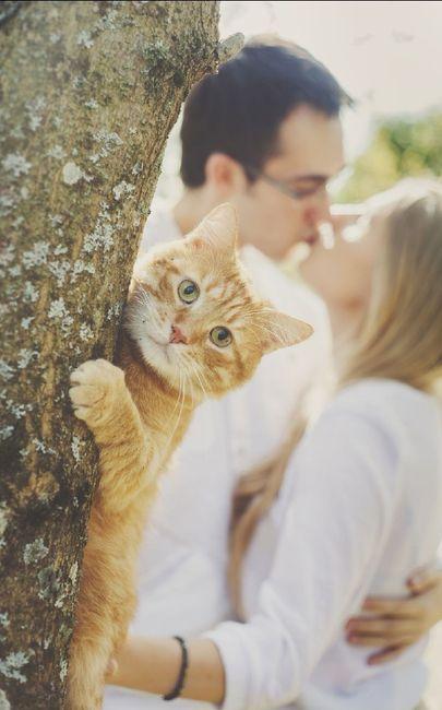 Feriez-vous annoncer votre mariage par votre chat ? 5