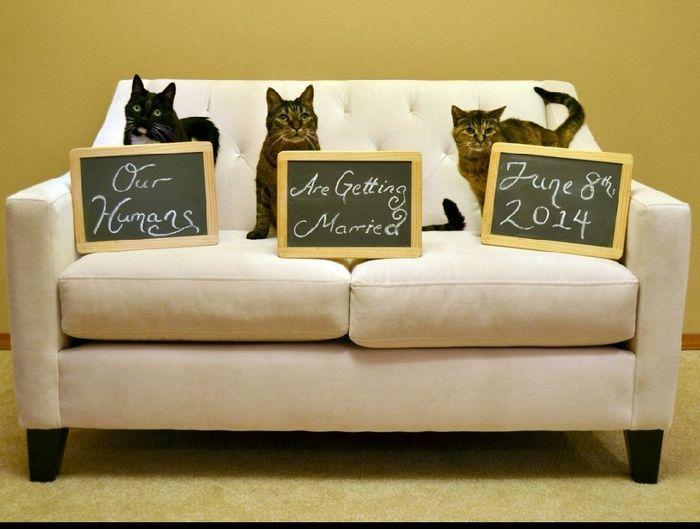Feriez-vous annoncer votre mariage par votre chat ? 6