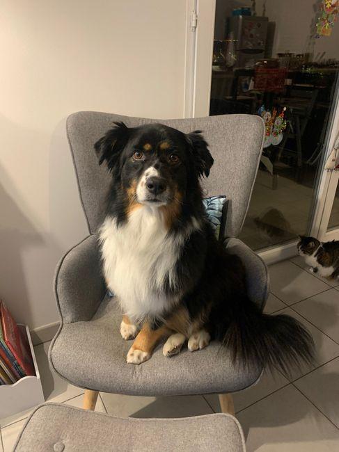 Des photos avec vos chiens ? 🐶 2