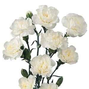 Quelles fleurs pour votre bouquet ? - 4
