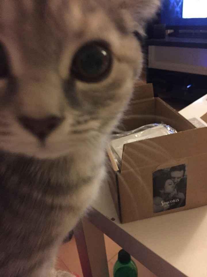 Petit chat d'amour !