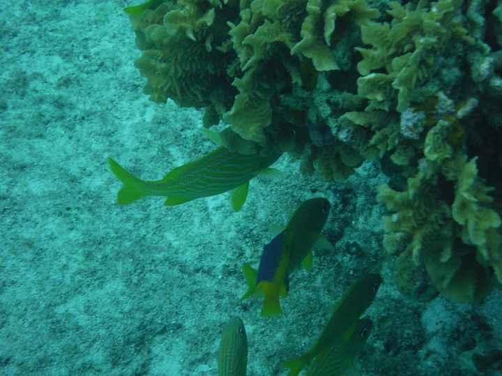 Snorkeling à Cozumel