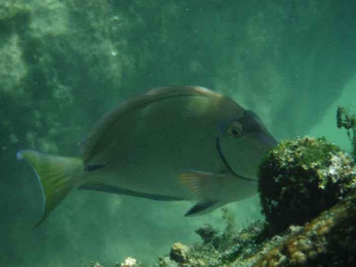 Snorkeling à Yal ku