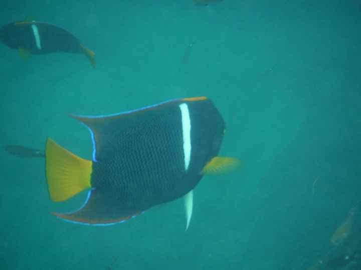 snorkeling aux Mariettas