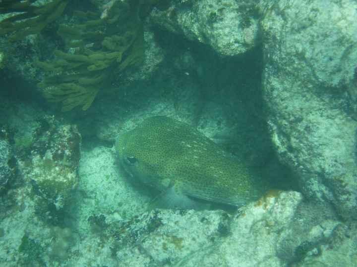 Snorkeling à siaan khan