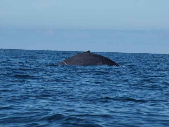 Baleines à puerto vallarta
