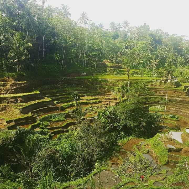 Voyage de noces à Bali, vos avis - 1