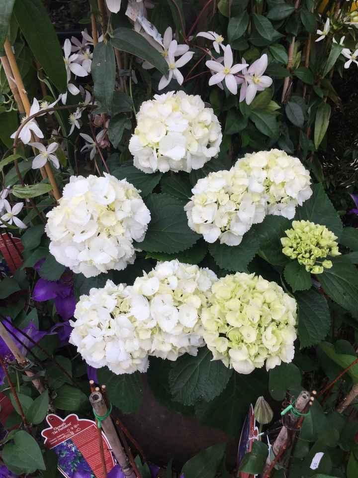 Inspiration fleurs blanches et bleues - 3
