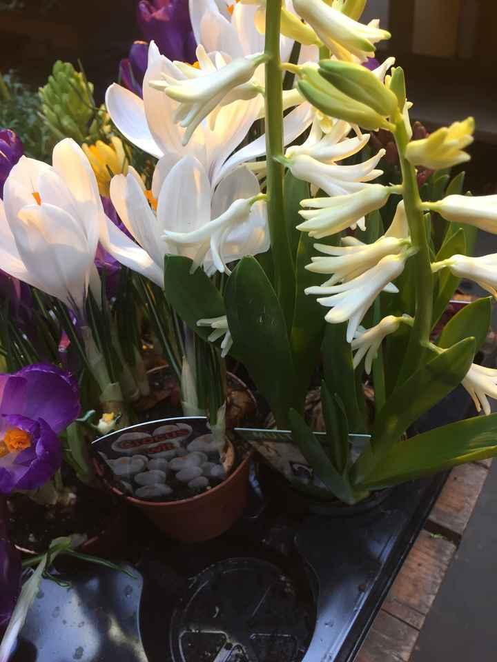 Inspiration fleurs blanches et bleues - 6