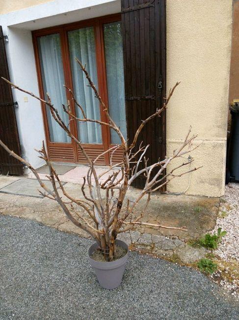 arbre a dragees diy en cours de fabrication d coration forum. Black Bedroom Furniture Sets. Home Design Ideas