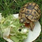 Tortue&salade