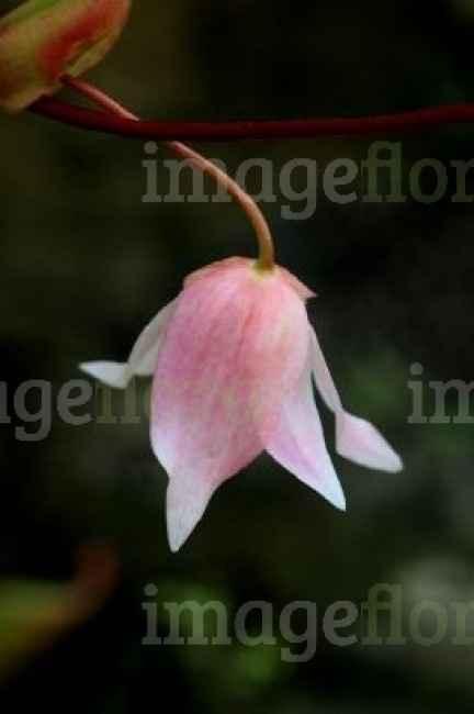 fleur du bouquet 1
