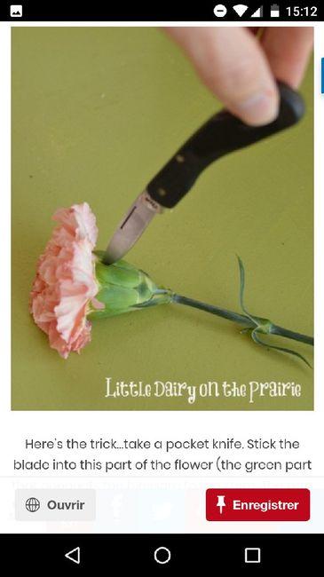 Astuce  fleurs eco pour transformer des oeillets en pivoines 1