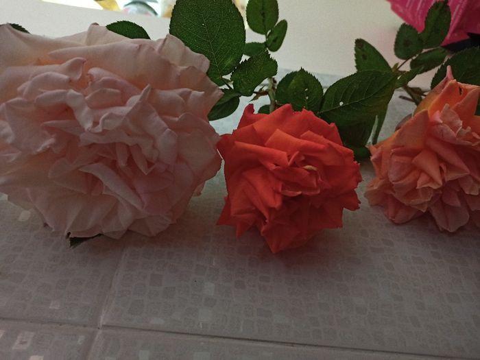 Pétales de roses séchées 3