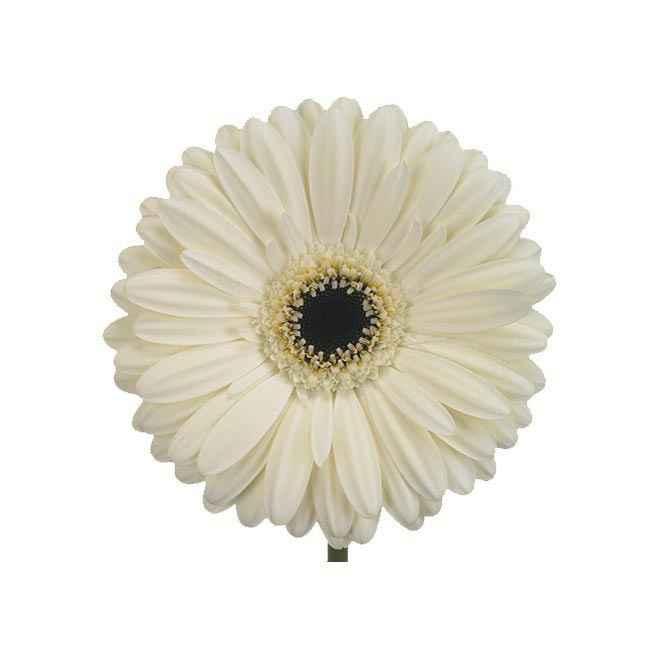 Doutes fleuriste 5
