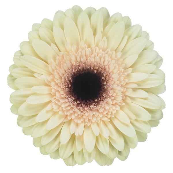 Doutes fleuriste 6