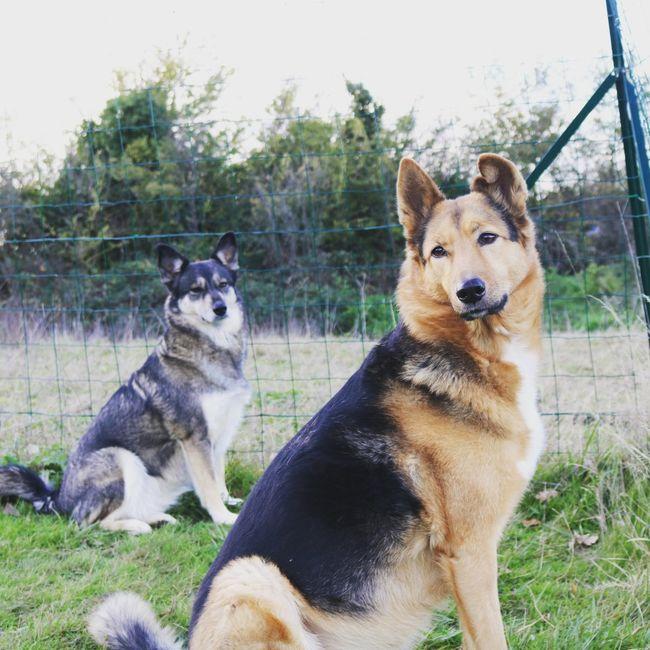 Des photos avec vos chiens ? 🐶 5