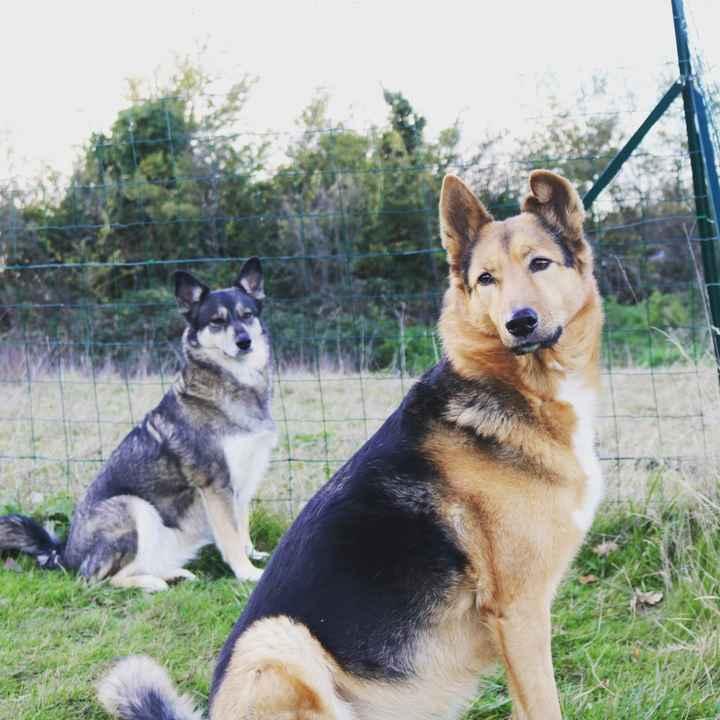 Des photos avec vos chiens ? 🐶 - 1