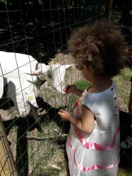 lea animaux pour les enfants au domaine.ma fille et sa robe