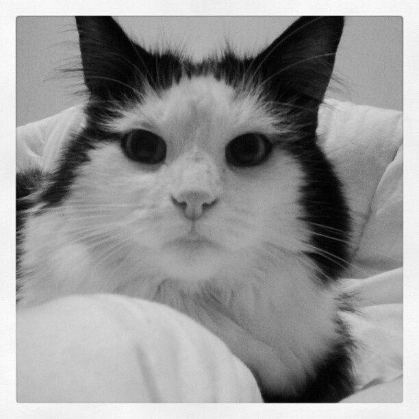 Mon bébé d'amour: Juno