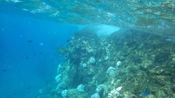 Maui - Black rock - Plongée avec des tortues