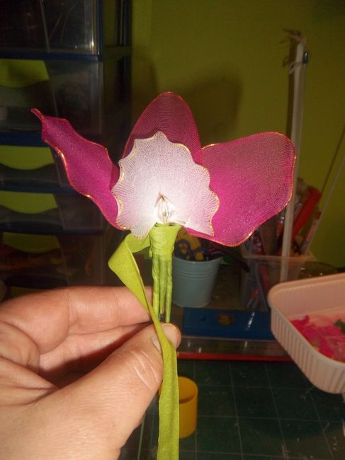 orchidee collant