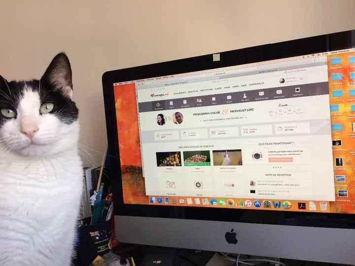 Notre Chat, fan de la page