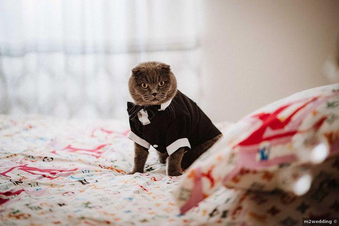 Il y aura des animaux à ton mariage ? 🐶🐱 1