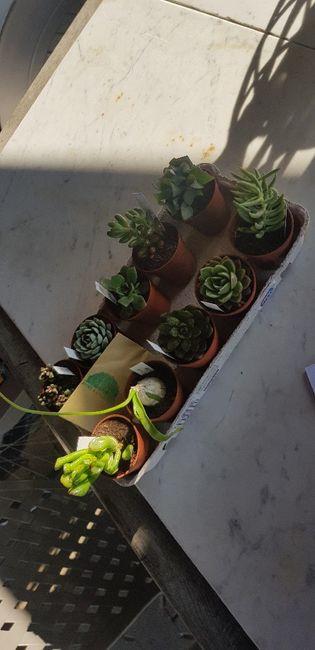 Cadeaux invités : mini plante 3