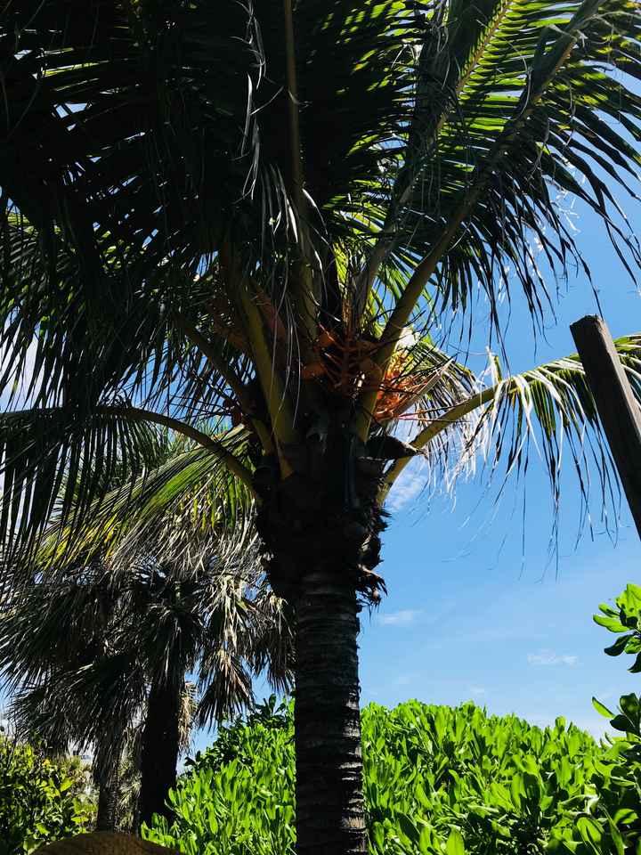 Voyage de noces en Floride: le récit - 2