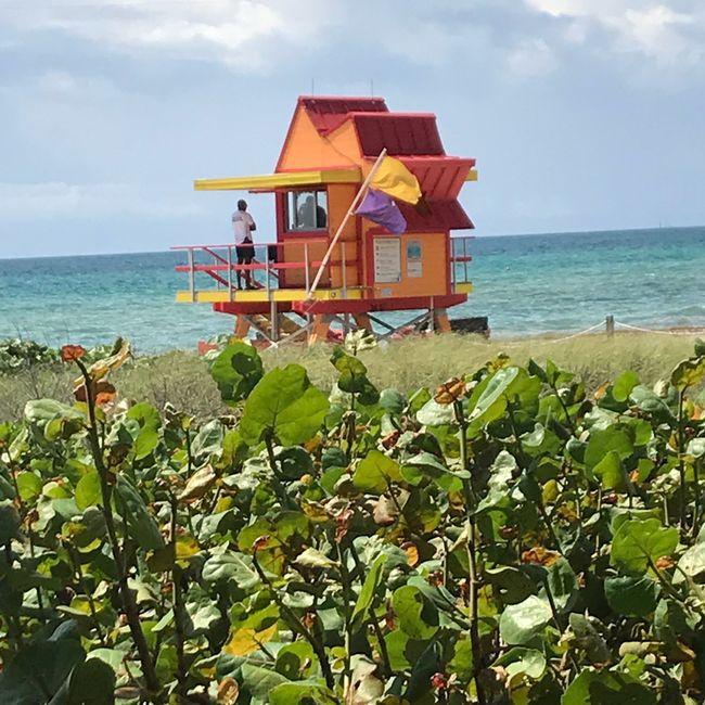 Voyage de noces en Floride: le récit 1