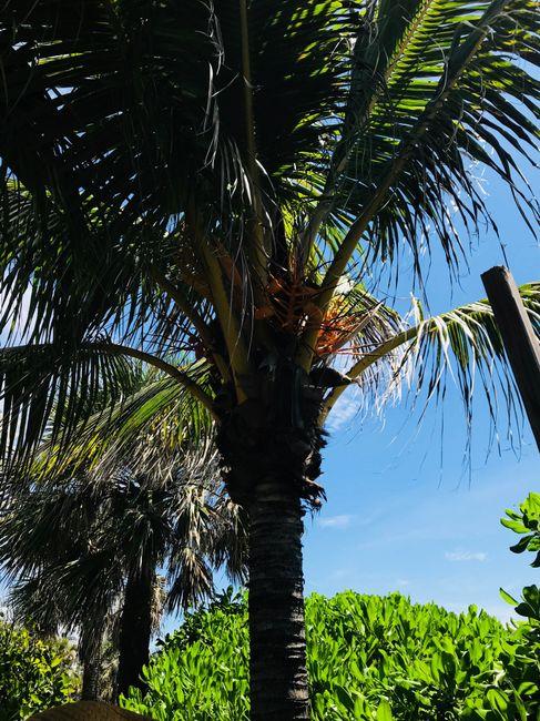 Voyage de noces en Floride: le récit 2