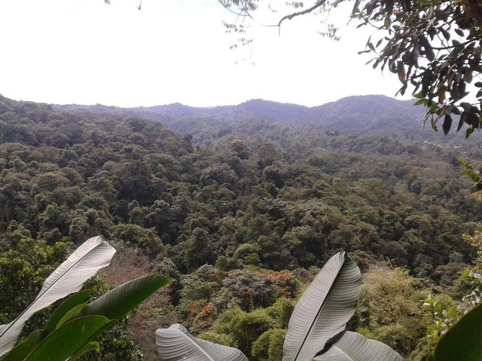foret tropicale costa rica