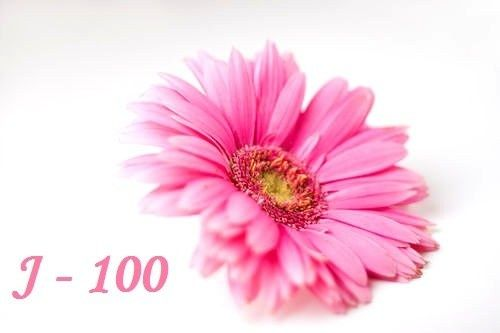 J-100 avant le grand jour