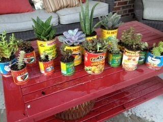 Inspi cactus 12